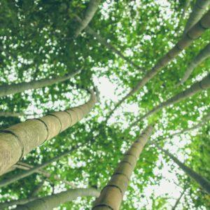 Resilienz wie ein Bambus bedeutet Widerstandsfähigkeit